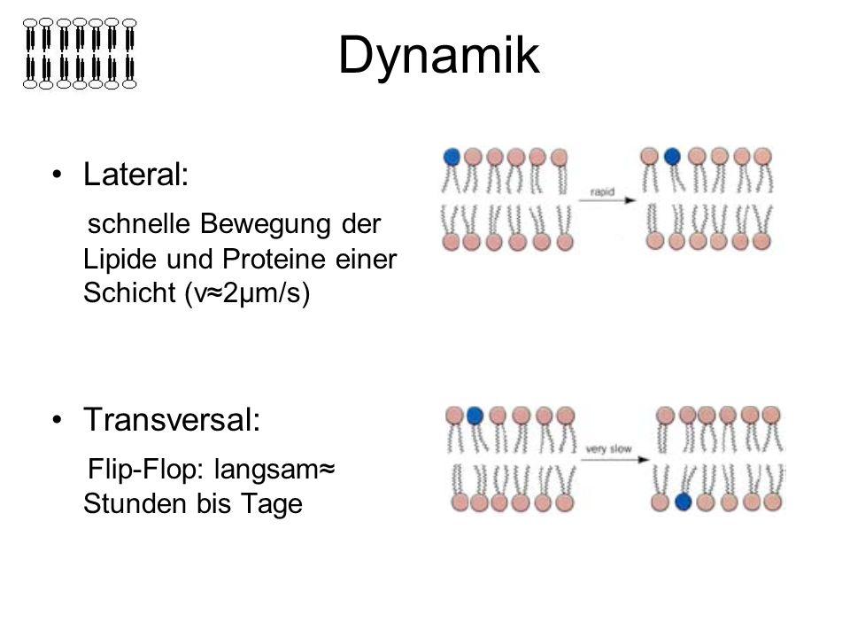 Dynamik Lateral: schnelle Bewegung der Lipide und Proteine einer Schicht (v≈2μm/s) Transversal: Flip-Flop: langsam≈ Stunden bis Tage.