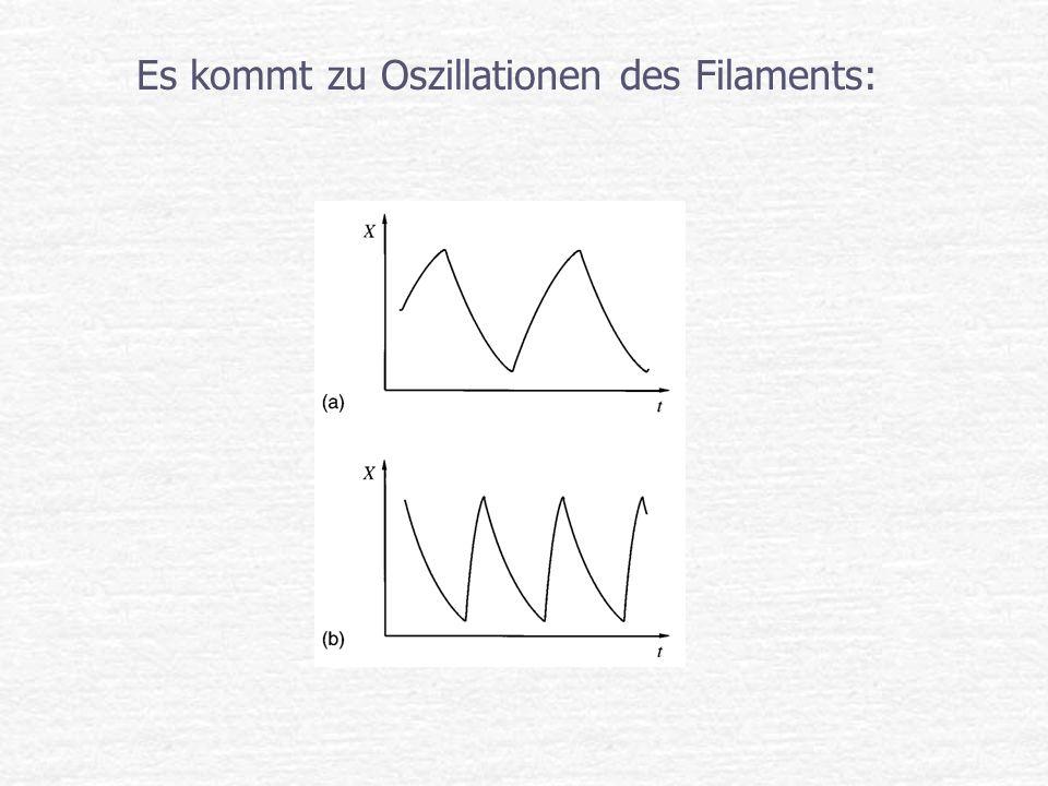 Es kommt zu Oszillationen des Filaments: