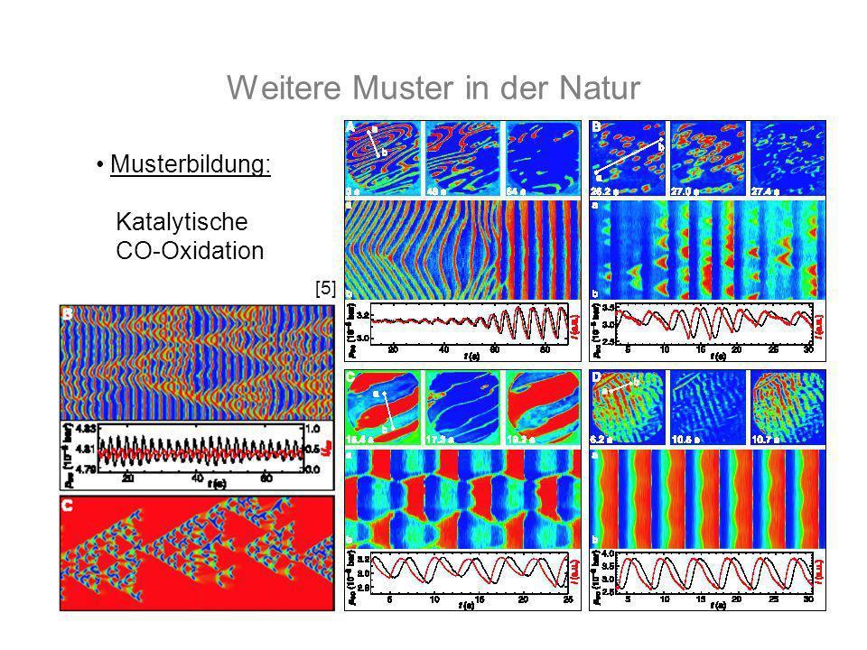 Weitere Muster in der Natur