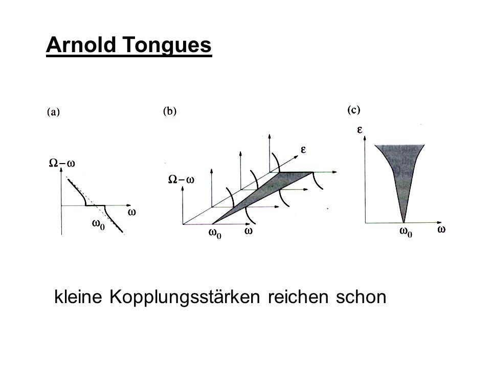 Arnold Tongues kleine Kopplungsstärken reichen schon