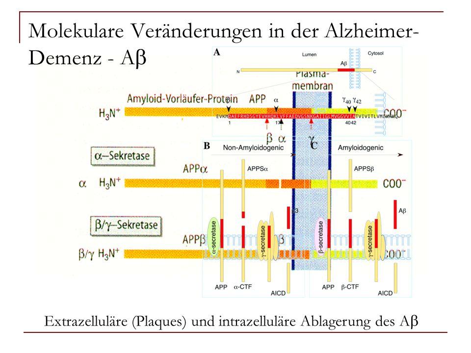 Molekulare Veränderungen in der Alzheimer-Demenz - Ab