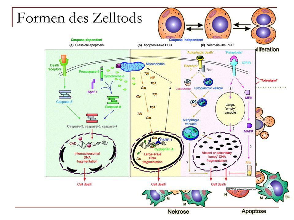 Formen des Zelltods