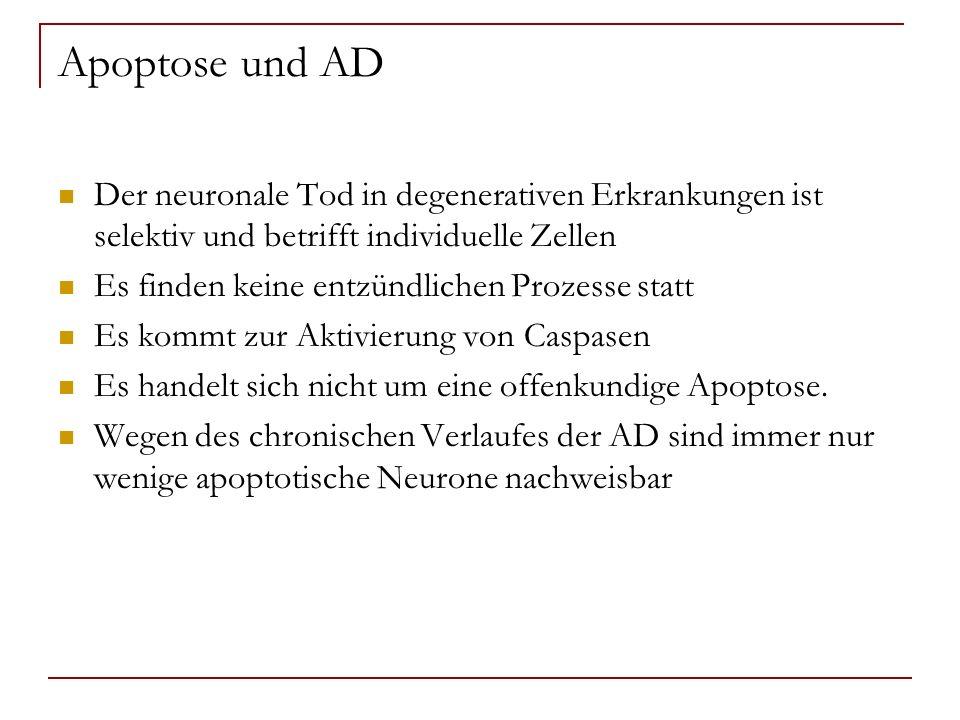 Apoptose und AD Der neuronale Tod in degenerativen Erkrankungen ist selektiv und betrifft individuelle Zellen.