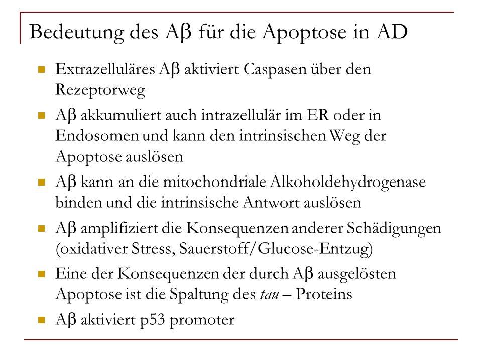 Bedeutung des Ab für die Apoptose in AD