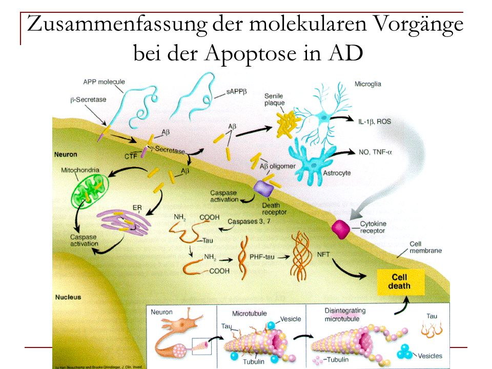 Zusammenfassung der molekularen Vorgänge