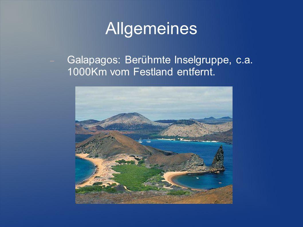 Allgemeines Galapagos: Berühmte Inselgruppe, c.a. 1000Km vom Festland entfernt.
