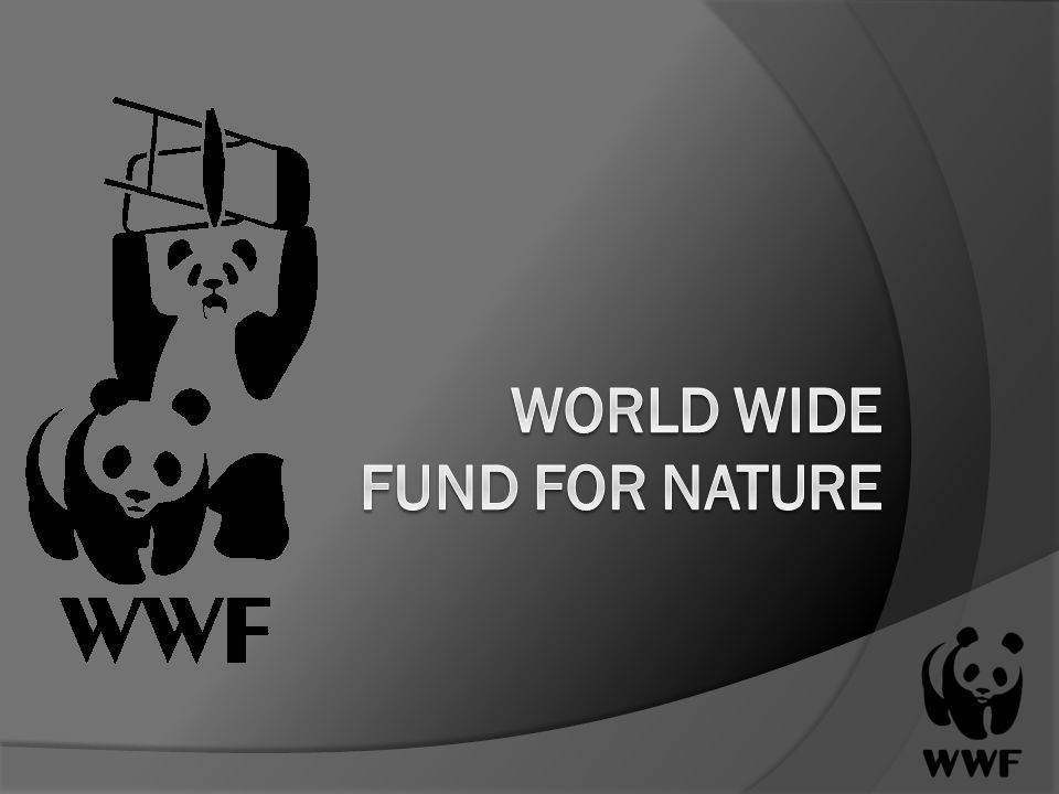 world wide fund essay For collectors | ebay details about 30 years wwf silver 999 proof medal,world wide fund for nature complete world wildlife fund (wwf) proof, essay european.
