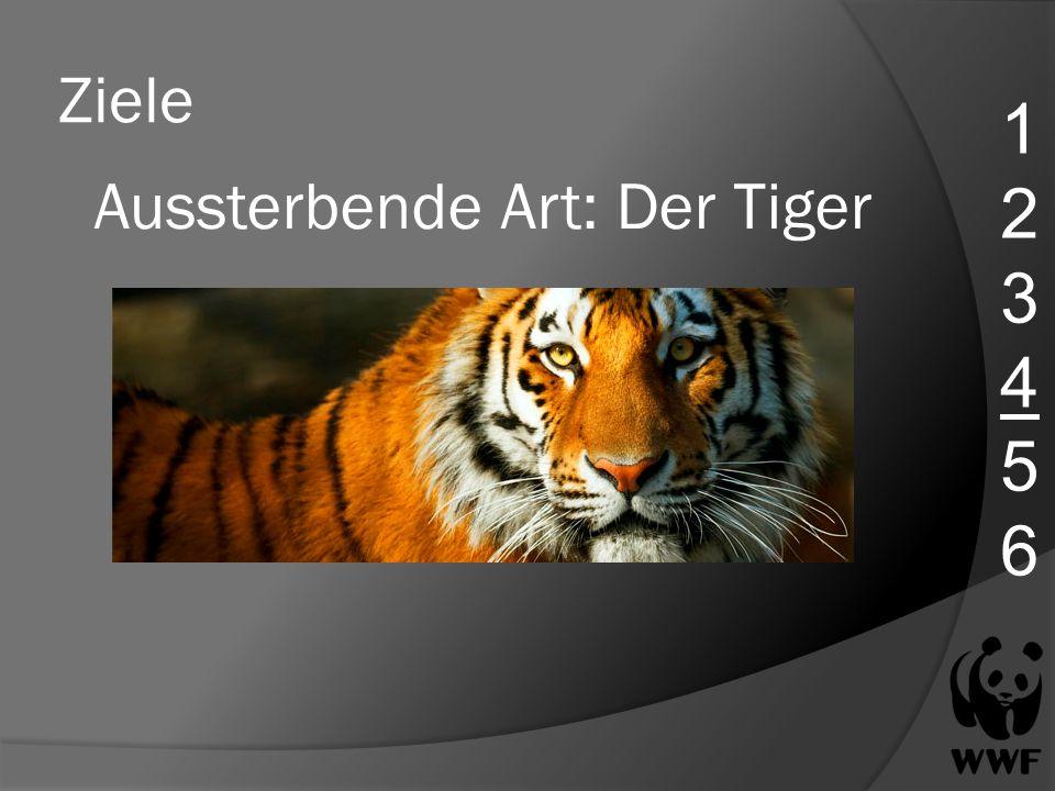 Aussterbende Art: Der Tiger
