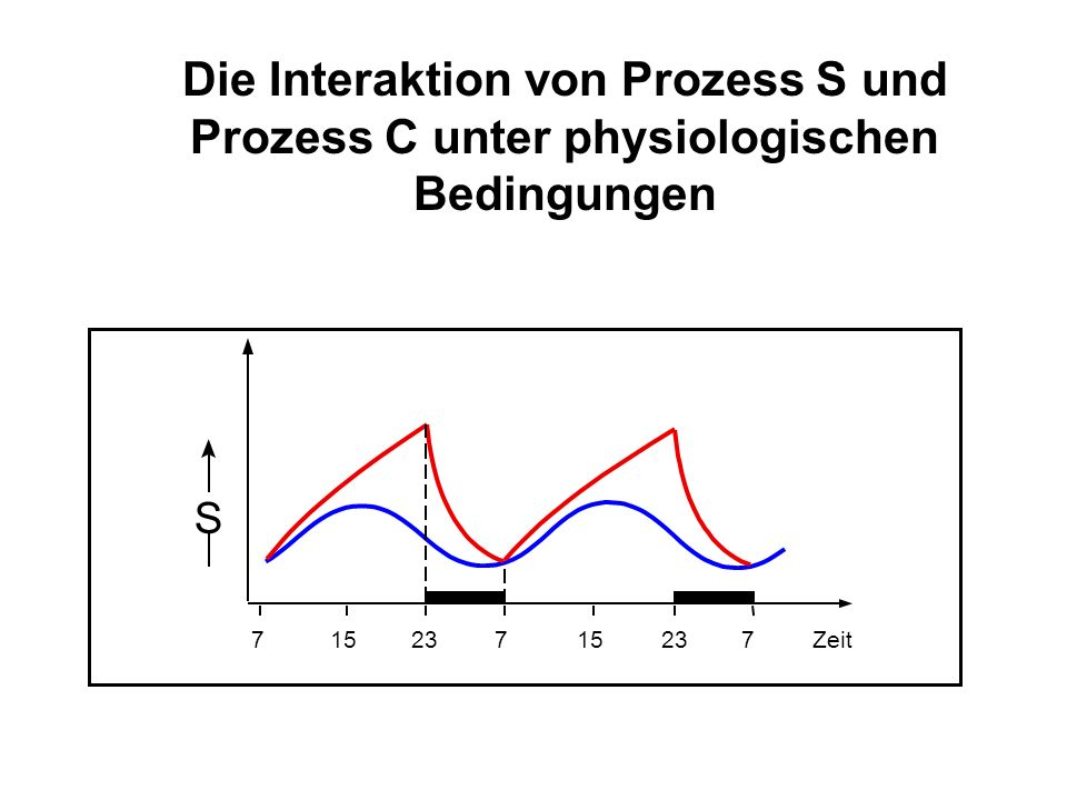 Die Interaktion von Prozess S und Prozess C unter physiologischen Bedingungen