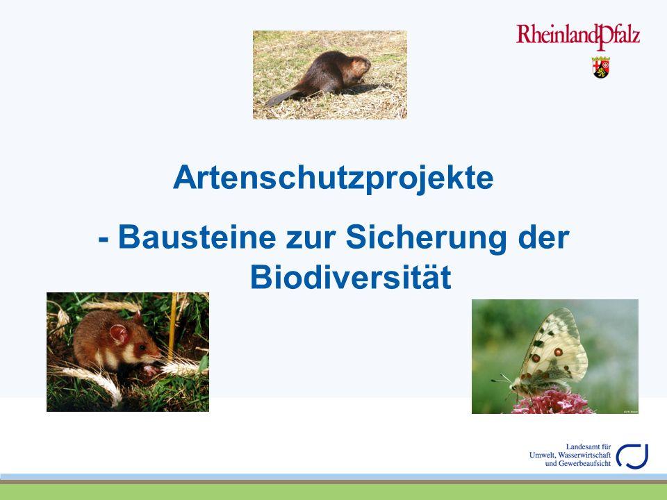 - Bausteine zur Sicherung der Biodiversität