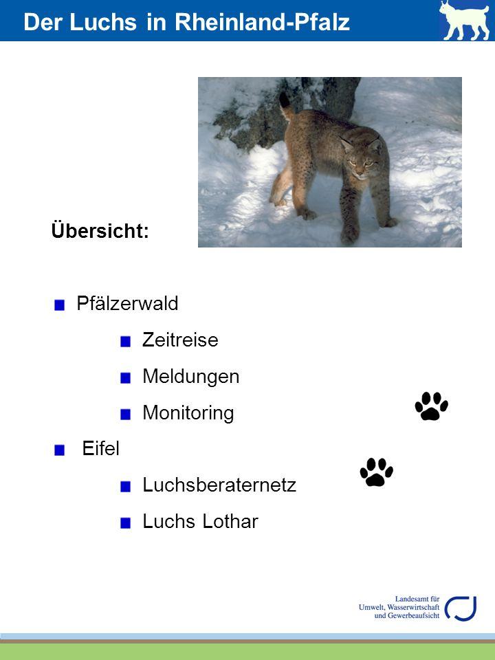 Der Luchs in Rheinland-Pfalz