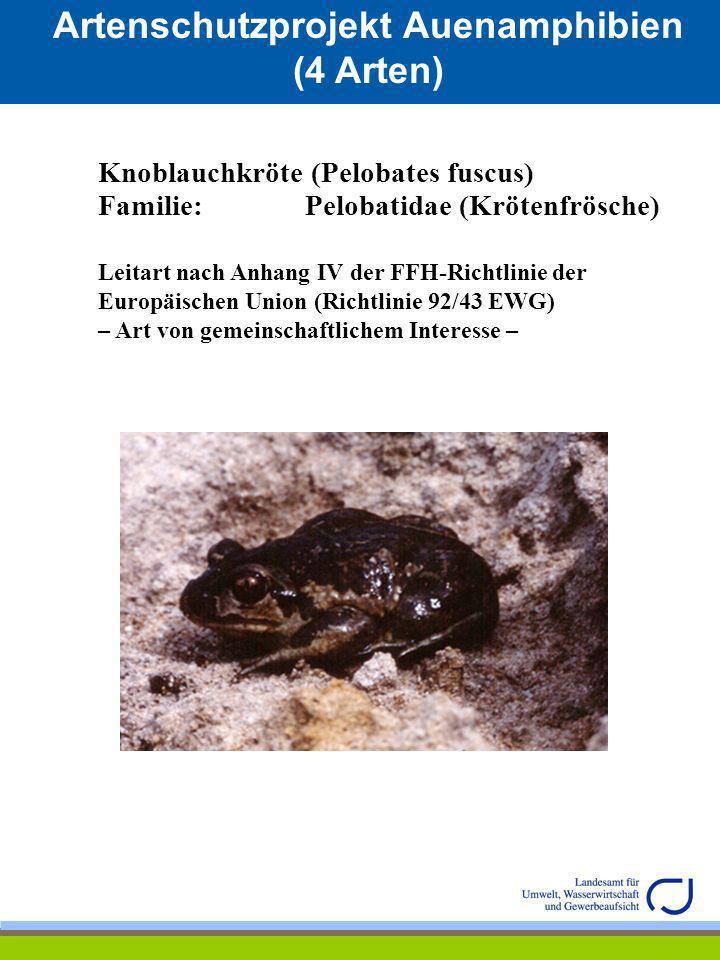 Artenschtzprojekt Blattfußkerbse