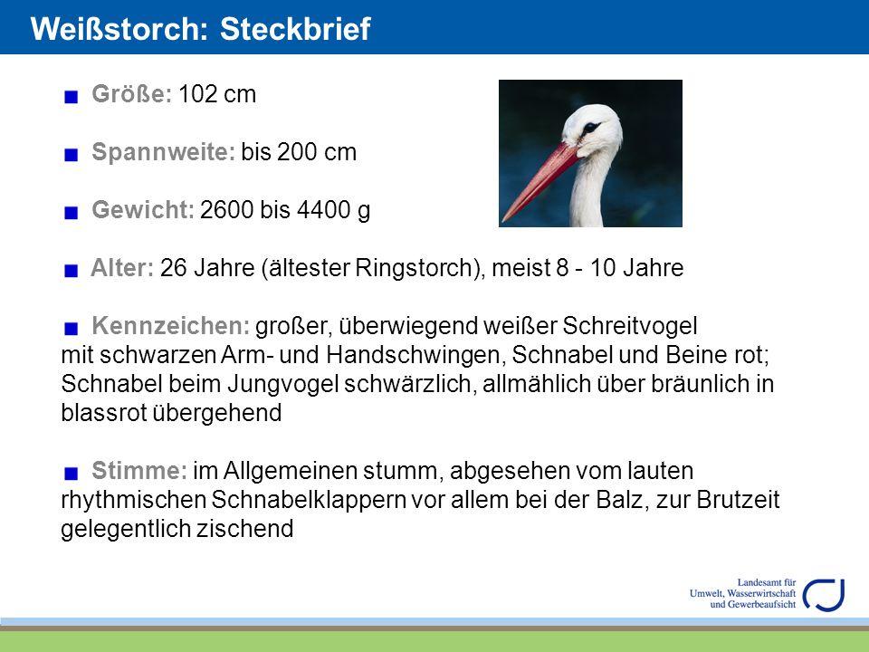 Weißstorch: Steckbrief
