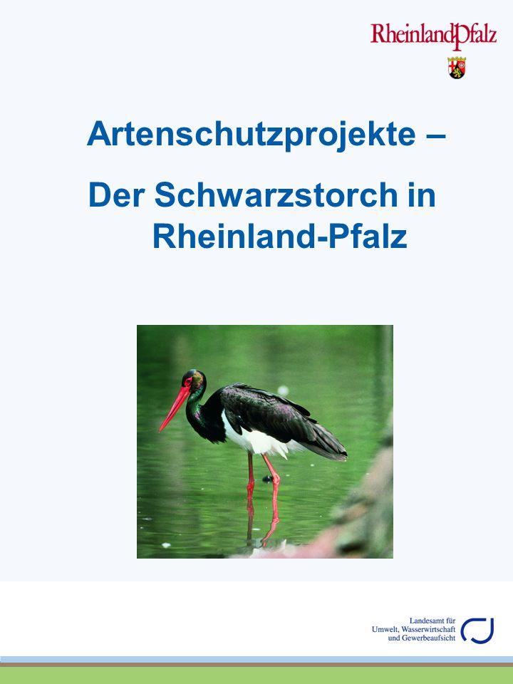 Artenschutzprojekte – Der Schwarzstorch in Rheinland-Pfalz