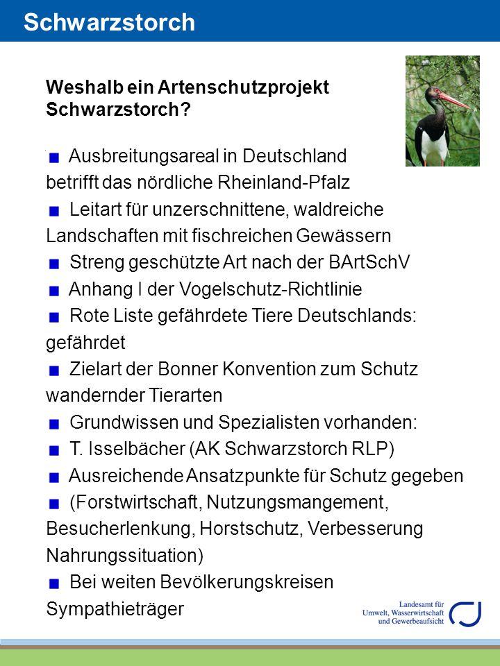 Schwarzstorch Weshalb ein Artenschutzprojekt Schwarzstorch