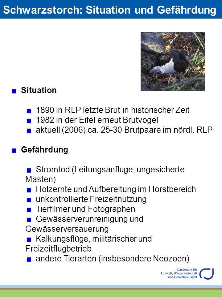 Schwarzstorch: Situation und Gefährdung