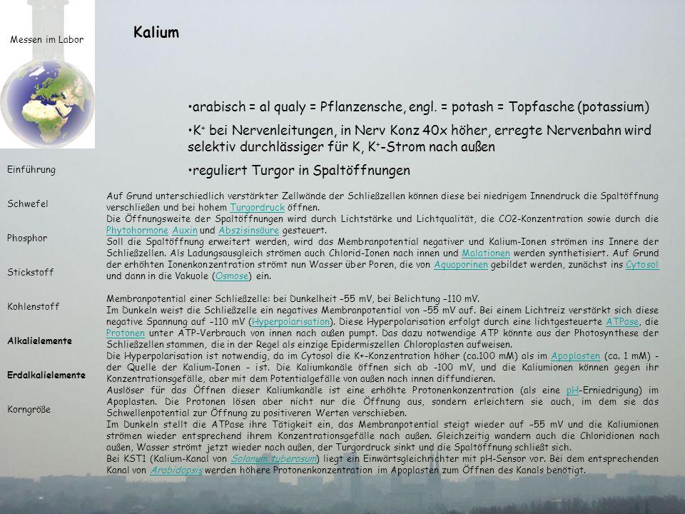 Kalium Messen im Labor. arabisch = al qualy = Pflanzensche, engl. = potash = Topfasche (potassium)