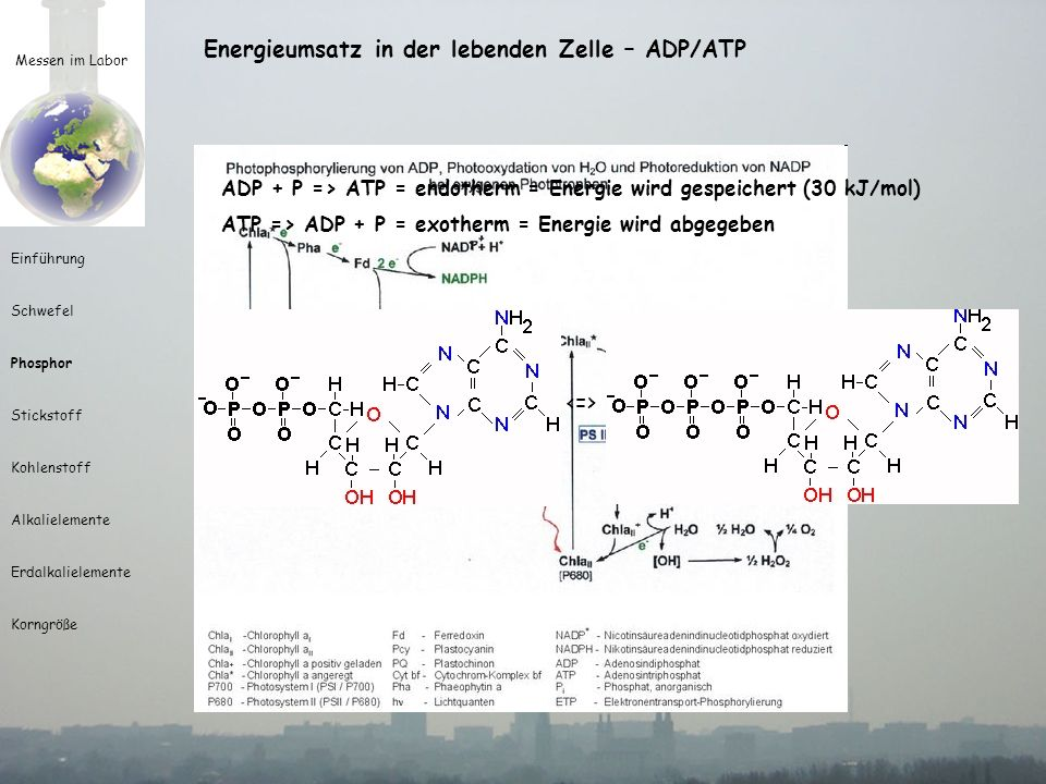 Energieumsatz in der lebenden Zelle – ADP/ATP <=>