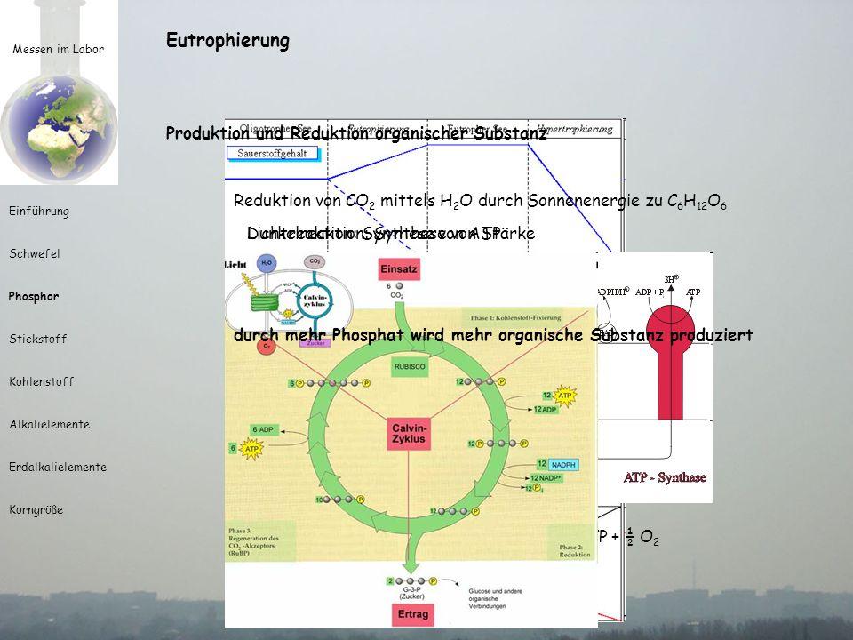 Eutrophierung Produktion und Reduktion organischer Substanz