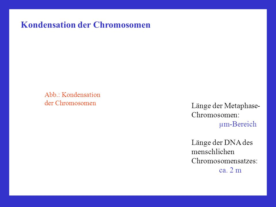 Kondensation der Chromosomen