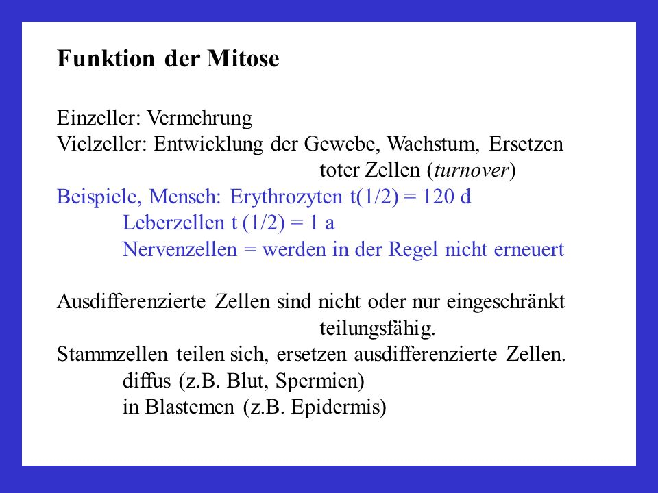 Funktion der Mitose Einzeller: Vermehrung