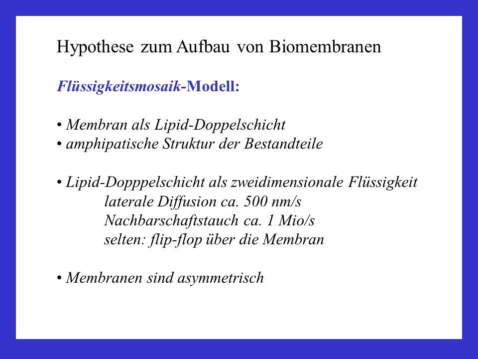 Hypothese zum Aufbau von Biomembranen
