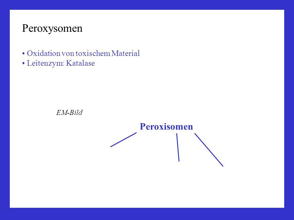Peroxysomen Peroxisomen Oxidation von toxischem Material