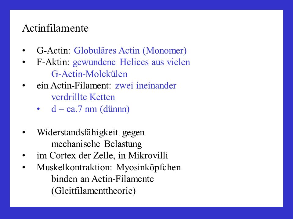 Actinfilamente G-Actin: Globuläres Actin (Monomer)