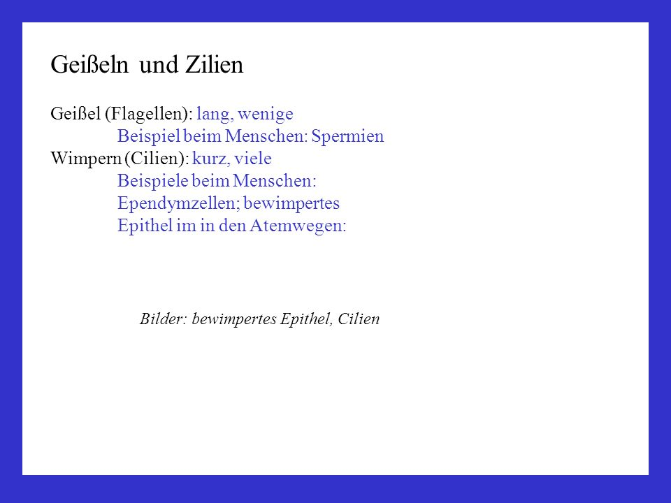 Geißeln und Zilien Geißel (Flagellen): lang, wenige