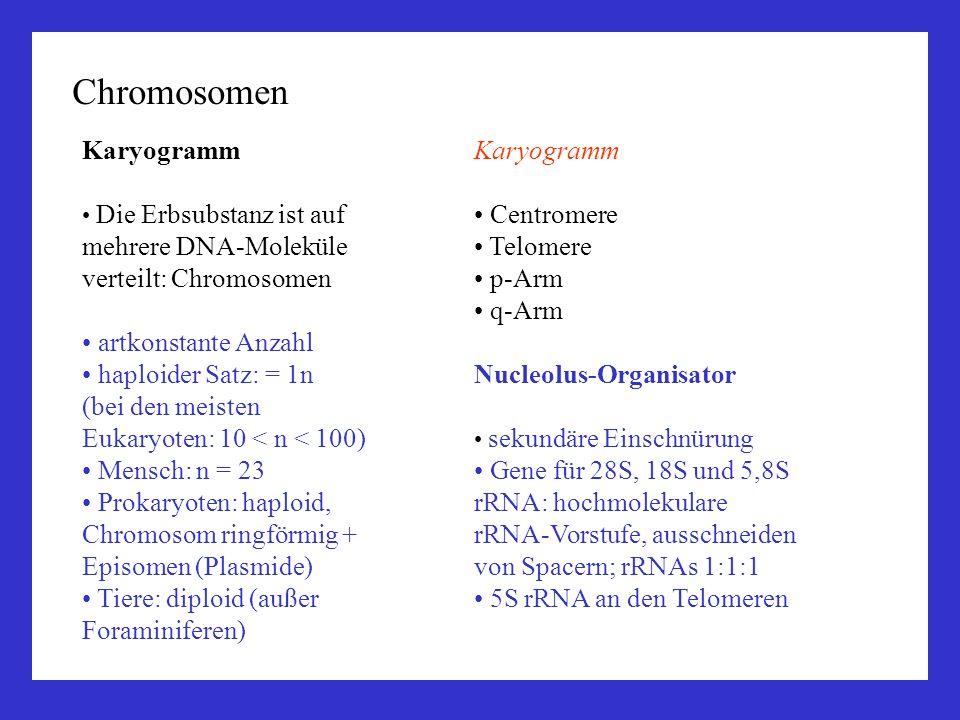 Chromosomen Karyogramm artkonstante Anzahl haploider Satz: = 1n