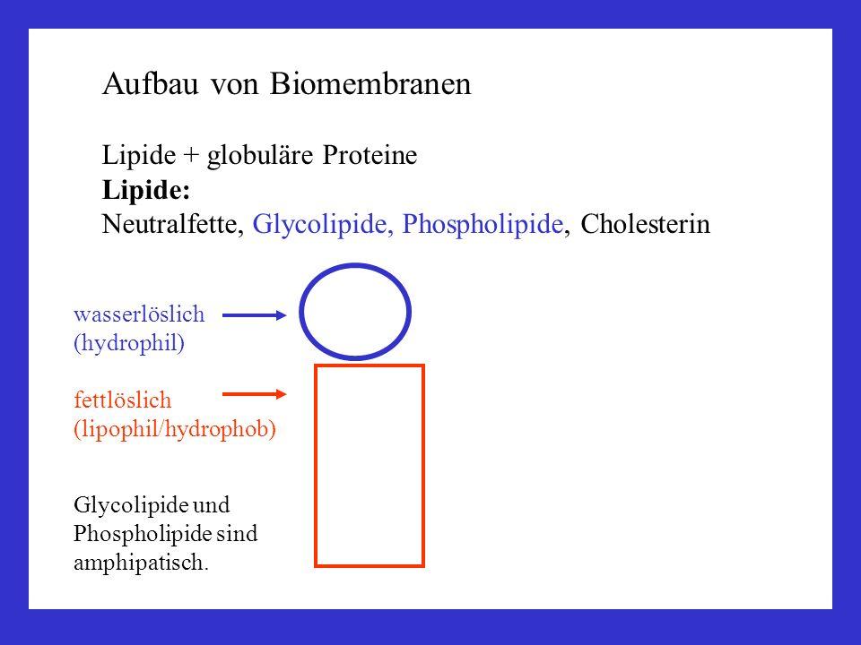 Aufbau von Biomembranen