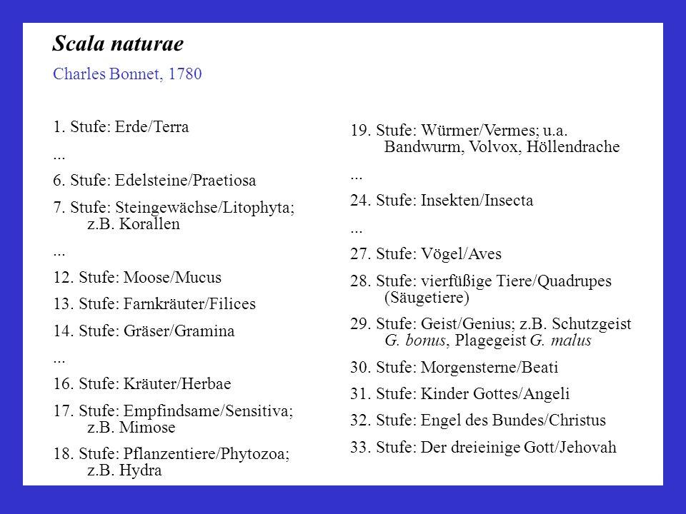 Scala naturae Charles Bonnet, 1780 1. Stufe: Erde/Terra ...