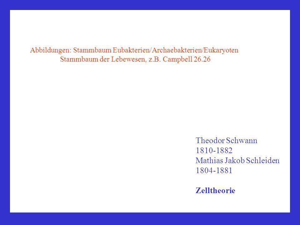 Mathias Jakob Schleiden 1804-1881 Zelltheorie