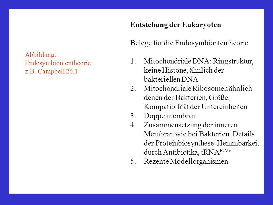 Entstehung der Eukaryoten Belege für die Endosymbiontentheorie