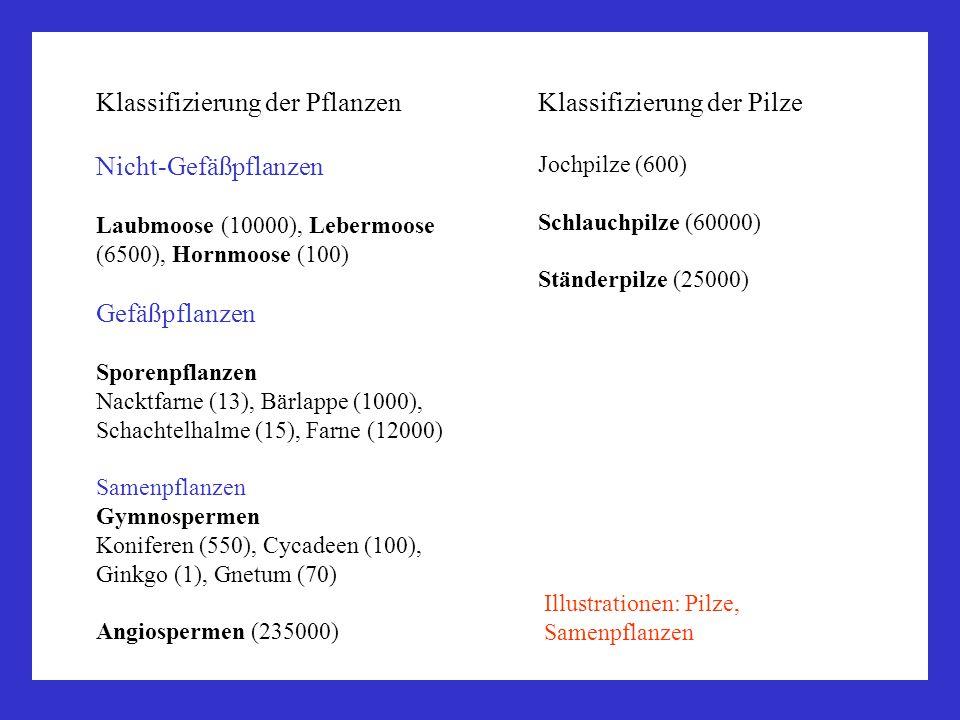 Klassifizierung der Pflanzen Nicht-Gefäßpflanzen