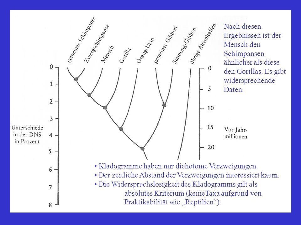 Nach diesen Ergebnissen ist der Mensch den Schimpansen ähnlicher als diese den Gorillas. Es gibt widersprechende Daten.