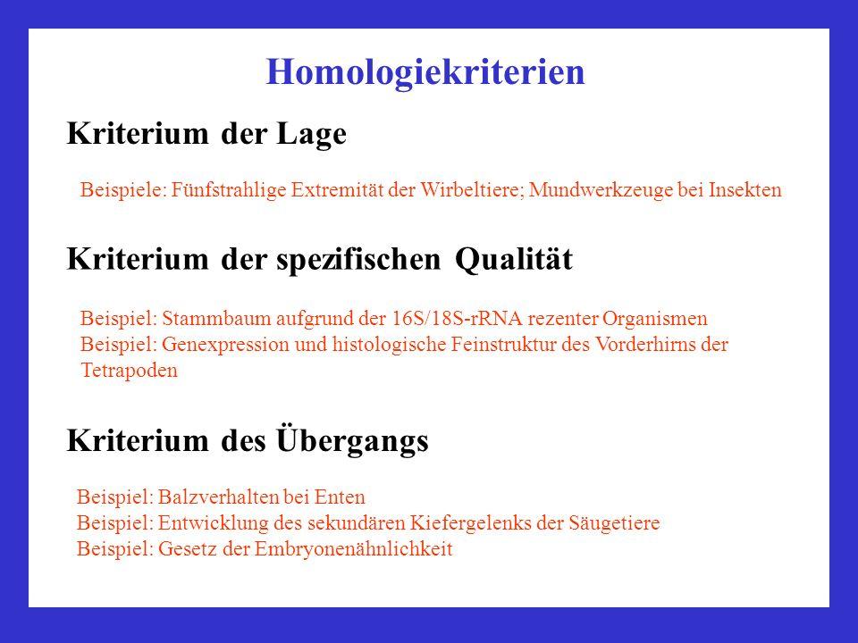 Homologiekriterien Kriterium der Lage