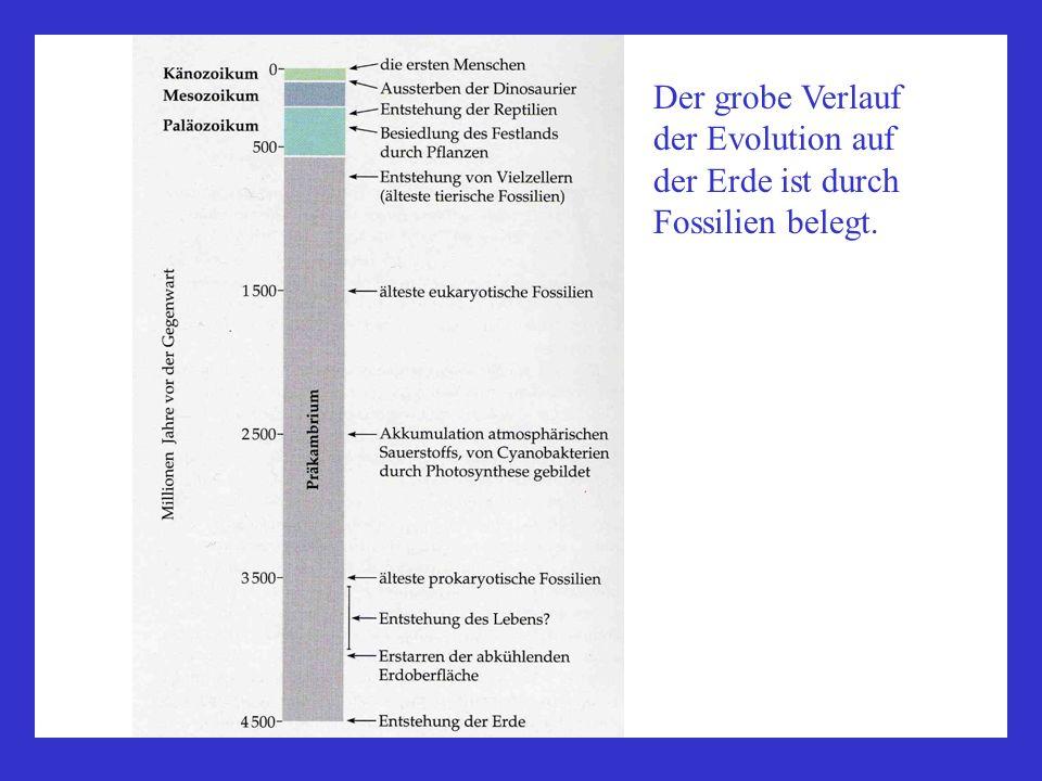 Der grobe Verlauf der Evolution auf der Erde ist durch Fossilien belegt.