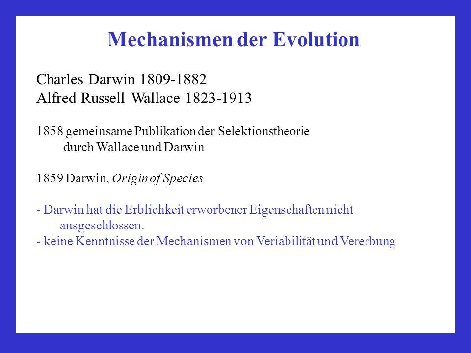 Mechanismen der Evolution