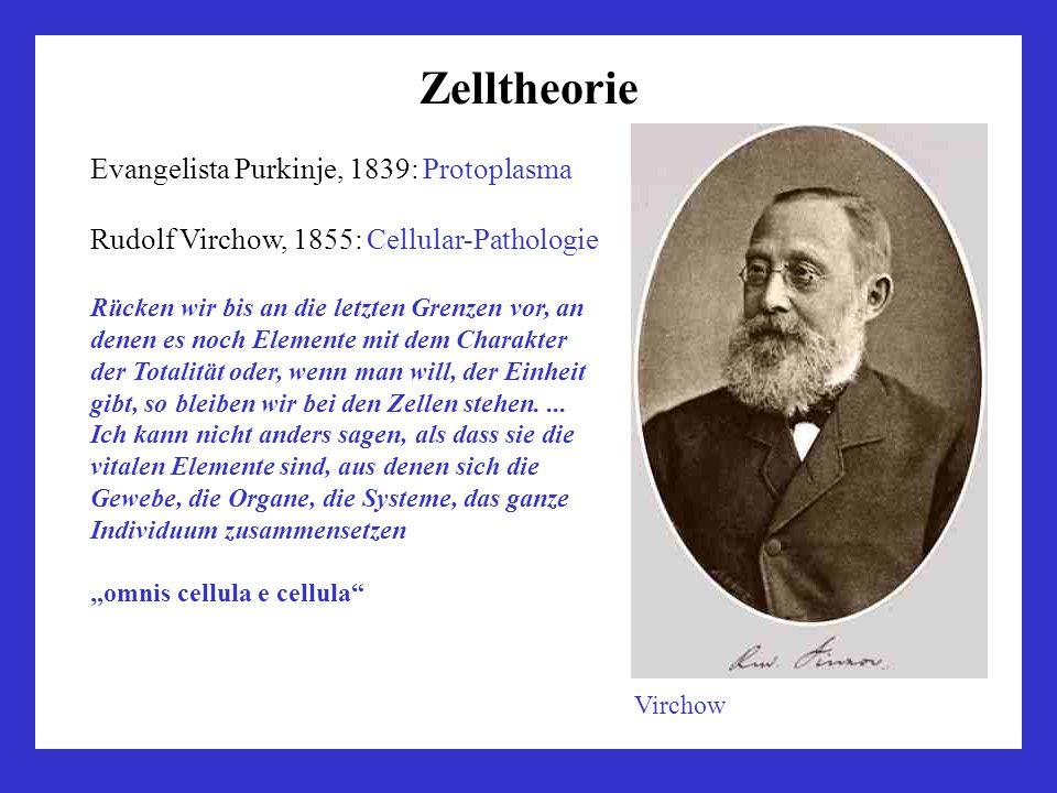 Zelltheorie Evangelista Purkinje, 1839: Protoplasma