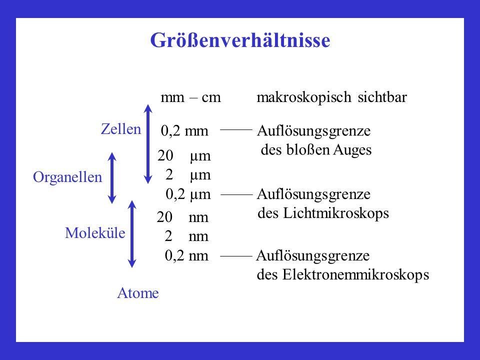 Größenverhältnisse mm – cm makroskopisch sichtbar Zellen