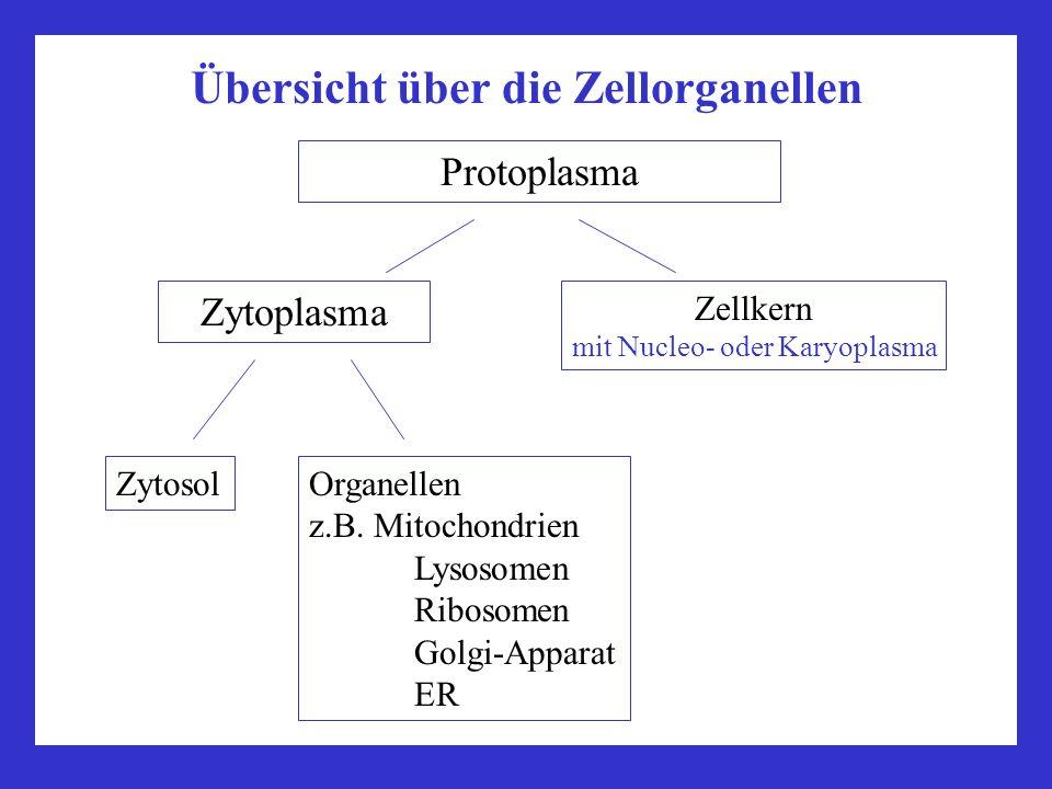 Übersicht über die Zellorganellen