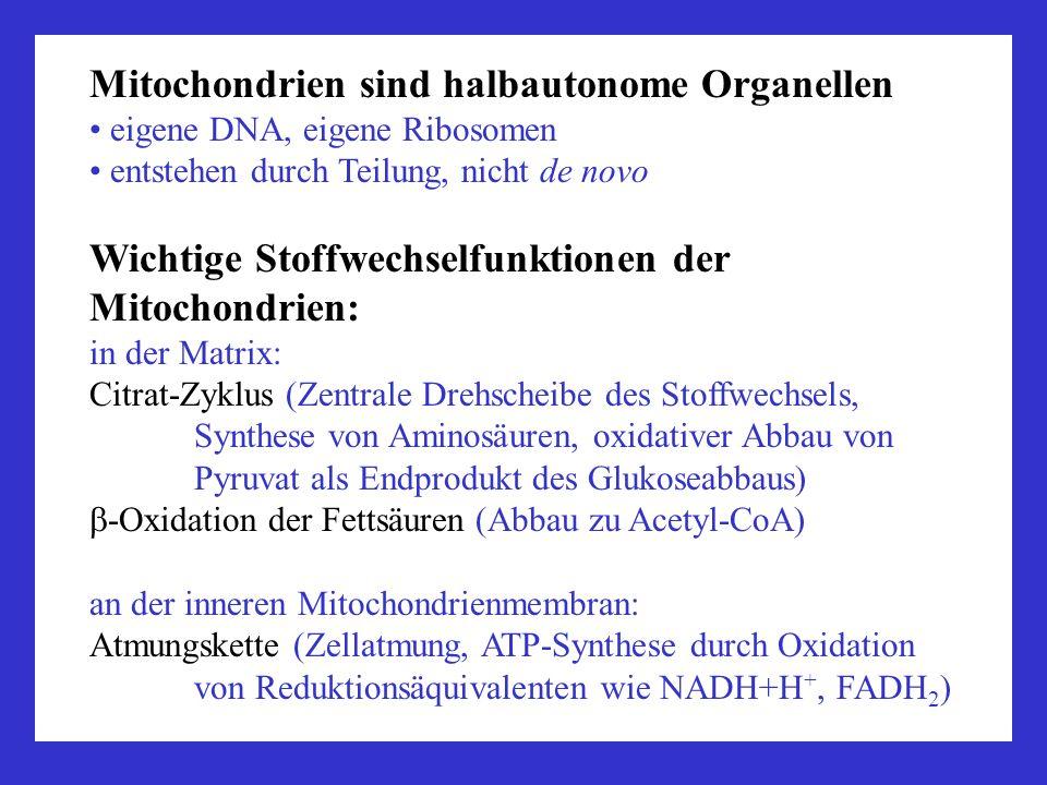 Mitochondrien sind halbautonome Organellen