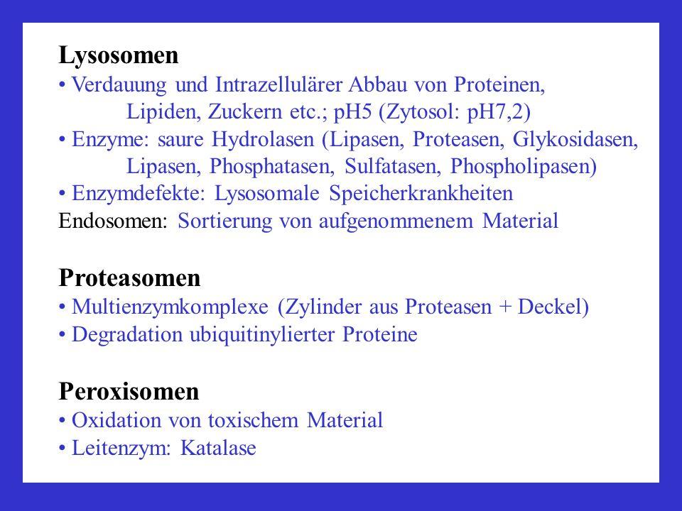 Lysosomen Proteasomen Peroxisomen