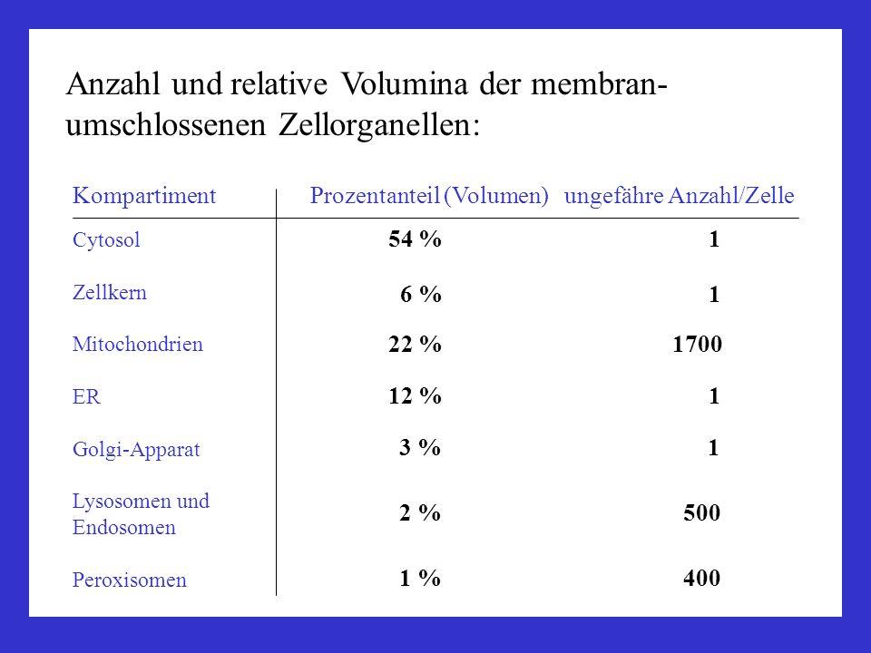 Anzahl und relative Volumina der membran-umschlossenen Zellorganellen:
