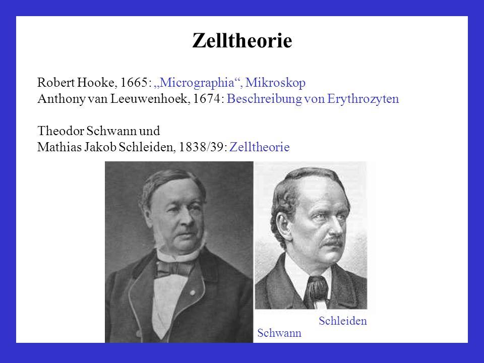 """Zelltheorie Robert Hooke, 1665: """"Micrographia , Mikroskop"""