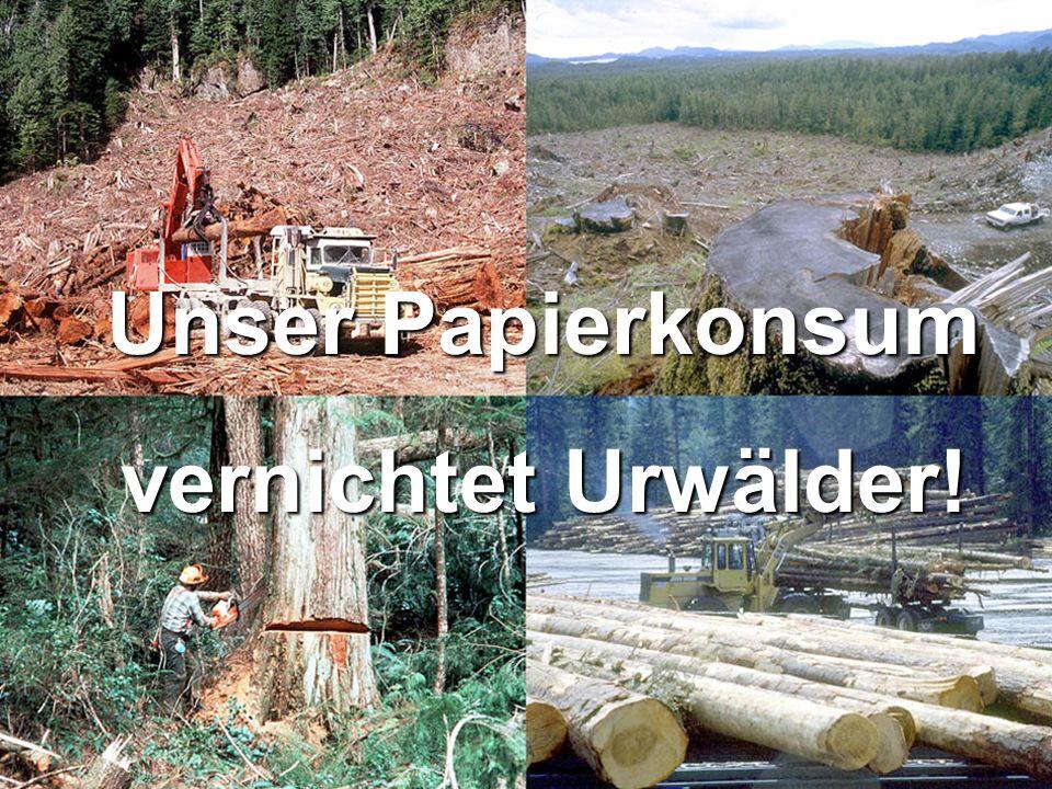 Unser Papierkonsum vernichtet Urwälder!