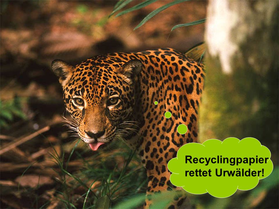 Recyclingpapier rettet Urwälder!