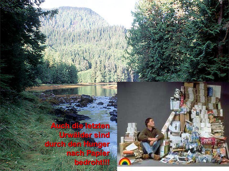 Auch die letzten Urwälder sind durch den Hunger nach Papier bedroht!!!
