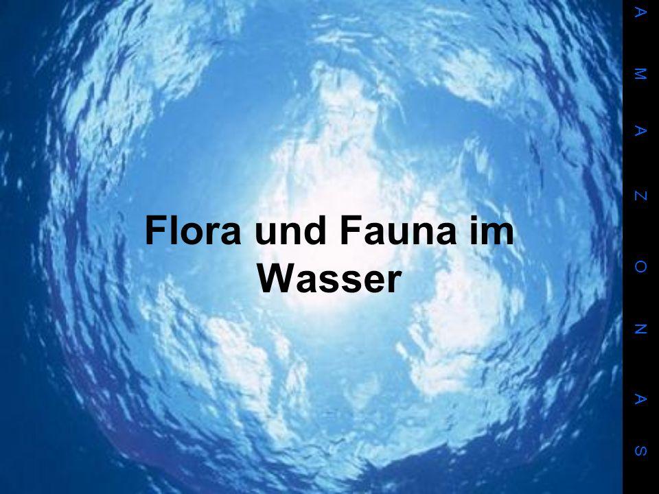 Flora und Fauna im Wasser